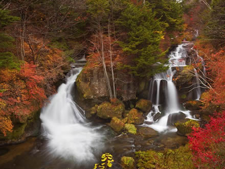 Waterfalls and maple leaves